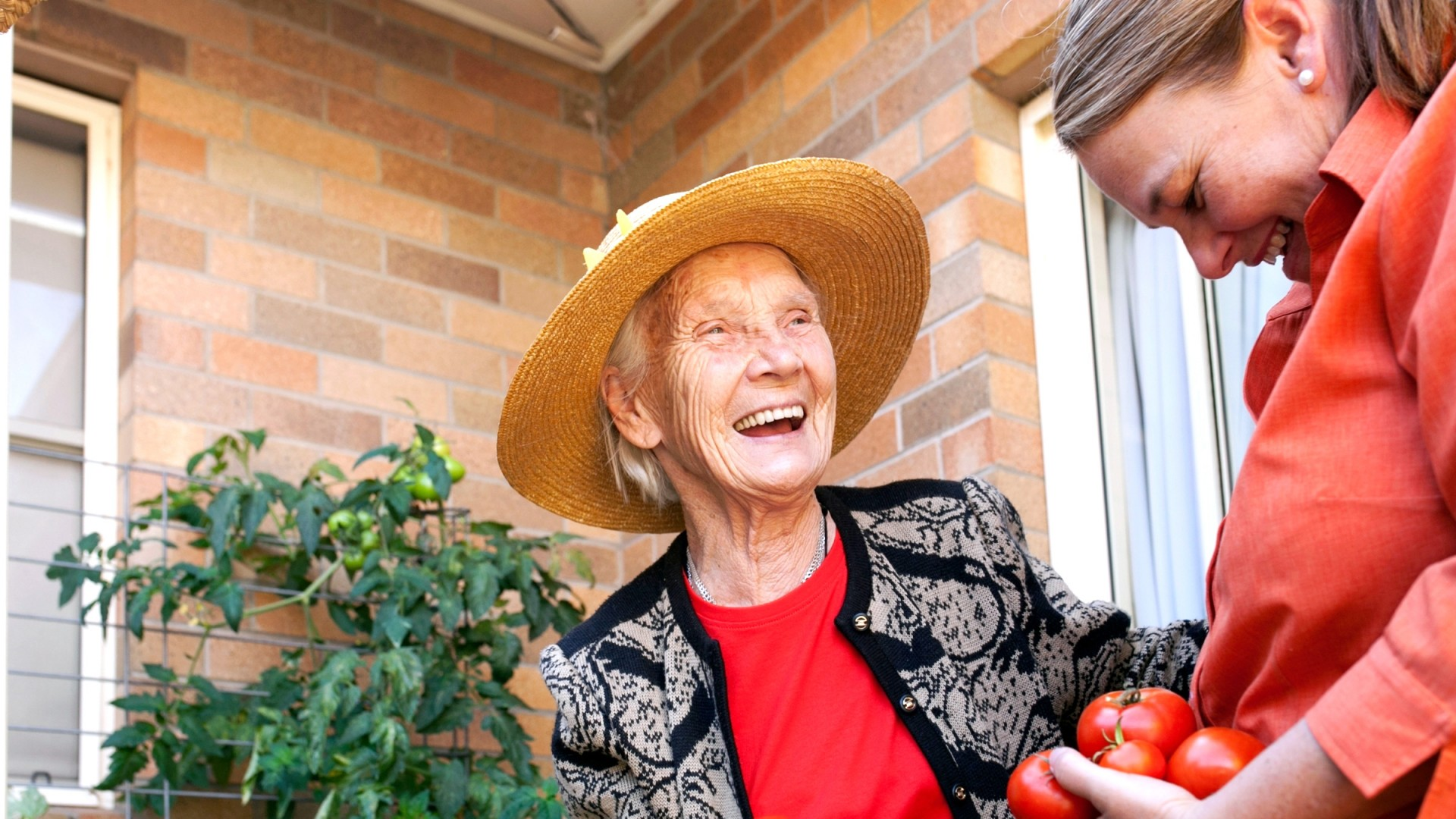 Elderly woman picking tomatoes with carer